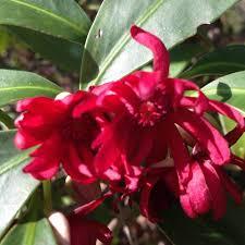 native plant nursery florida chiappini farm native nursery plantant com