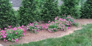drift roses april s gainesville landscaping plant drift the masters