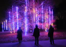 giveaway win four tickets to illumination tree lights at the