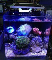led lights for coral tanks amazon com sea marine coral sps lps reef fish tank led light mini