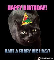 Happy Birthday Cat Memes - cat birthday fun furry happy birthday humor meow valous purr day