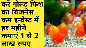 gold fish farming business detels in कर