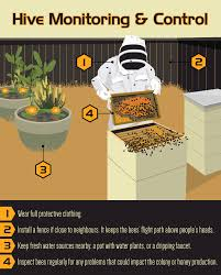 how to raise bees in your backyard home outdoor decoration