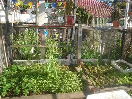 ii public community gardens sustainable self sufficiency