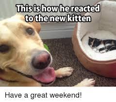 Weekend Meme - thisishowhereacted othenew kitten have a great weekend meme on