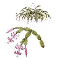 cactaceae or cactus family