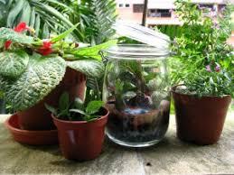 diy how to make a terrarium