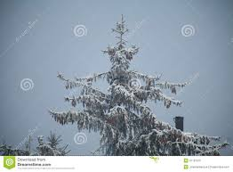 christmas tree in forest stock photo image of christmas 47197070