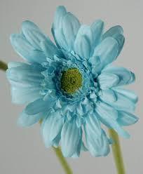 teal flowers 12 silk aqua blue gerbera daisies