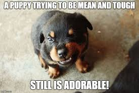 Puppy Meme - 25 adorable puppy memes that ll completely melt your heart