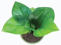 houseplants 7 best houseplants for the kitchen old house restoration