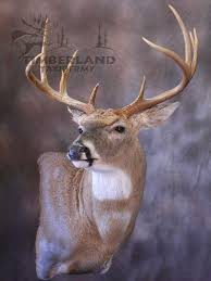 Deer Pedestal Tried A New Wall Pedestal Missouri Whitetails Your Missouri