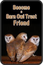 Where Does The Barn Owl Live Barn Owls In Winter The Barn Owl Trust
