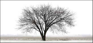 wide tree border