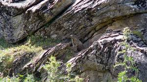 famille bureau marmottes compagnie famille bureau guides ariege pyrenees 4 bureau