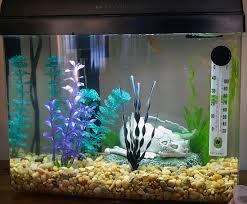 properly aerating your aquarium ratemyfishtank