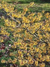 Flower Shrubs For Shaded Areas - 25 beautiful shrubs for shade ideas on pinterest shrubs winter
