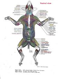 Sheep Heart Anatomy Quiz Website For Just Anatomy Learn Anatomy Learn Part 6