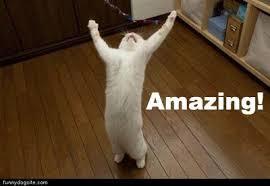 Whyyy Meme - coolest whyyy meme amazing cat memes image memes at relatably