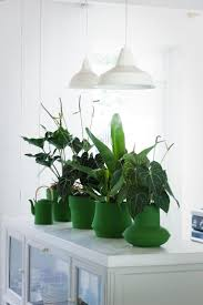 Easy Apartment Plants 76 Best Indoor Plants Images On Pinterest Plants Potted Plants