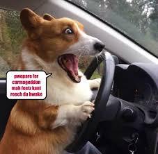 Dog In Car Meme - doge dog meme driving dog best of the funny meme