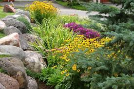 best photos of rock gardens 17 best ideas about rock garden design