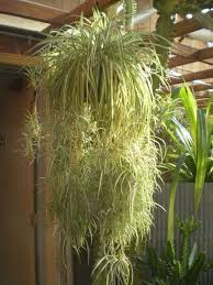 low light houseplants plants that don t require much light 664 best indoor plants images on pinterest house plants gardening
