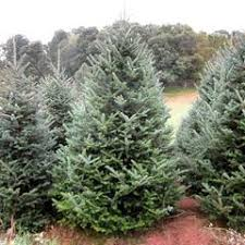 shop for christmas trees without lights at the garden gates