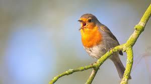 shazam for birds three apps that recognize bird calls