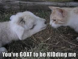 Lol Cat Meme - aps lolcat