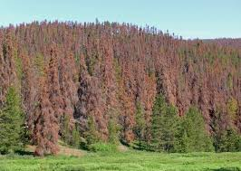 predicting tree mortality the ucsb current
