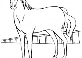 horse coloring pages coloring4free