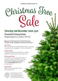 christmas tree sale pta christmas tree sale stranmillis primary school