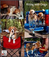 rving with dogs love your rv