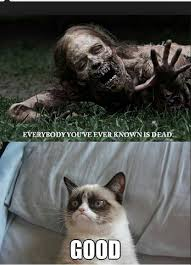 Grumpy Cat Meme No - 24 best grumpy cat images on pinterest ha ha grumpy cat and