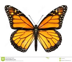 Monarch Migration Map Monarch Butterfly Royalty Free Stock Image Image 27320476