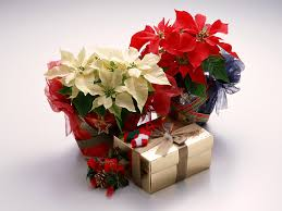 flowers gift beautiful bouquet http www a1mumbaiflowers beautiful