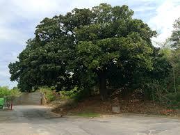 20 atlanta trees you should