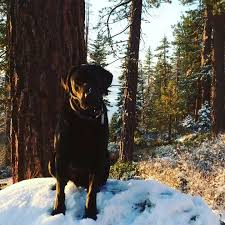 45 best killer lake tahoe views images on lake tahoe