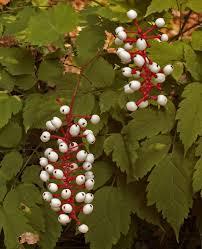 native plants of new england green garden book