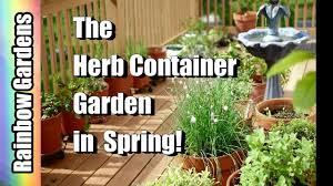 Herb Container Garden - the herb container garden a quick tour scallions chervil blue