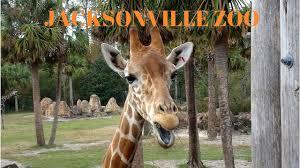 Zoo Lights Jacksonville by Jacksonville Zoo 2017 Youtube