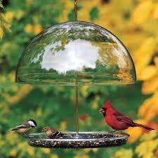 backyard archives the bird house ny