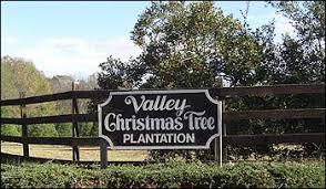 valley christmas tree plantation huntsville alabama