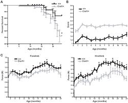 neuromuscular junction defects mice mutation dynein
