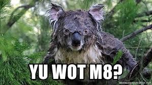 Koala Meme Generator - yu wot m8 belligerent wet koala meme generator