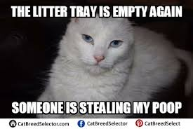 White Cat Meme - white cat memes images funny cute angry grumpy cats memes