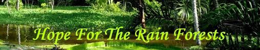 Tropical Rainforest Plant Species List - endangered rain forest plants