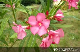 hawaii plants hawaii flora hawaiian flowers and plants