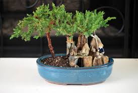 enchanting miniature bonsai decoration ideas
